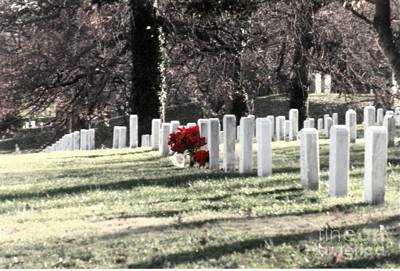 Photograph -  Arlington Cemetary by Clayton Bruster