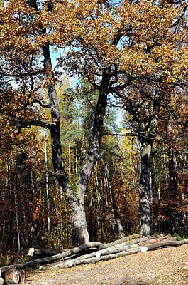Photograph -  Autumn In Forest by Henryk Gorecki