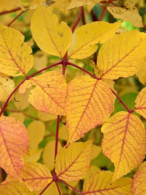 Photograph -  Autumn Leaves by Jouko Lehto