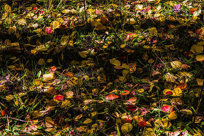 Photograph -  Autumn's Mosaic by Alana Thrower