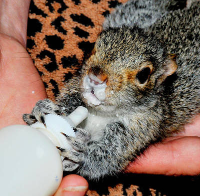 Yellowstone Digital Art -  Baby Squirrel by Aron Chervin