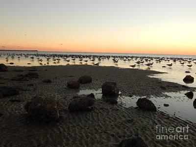Beach Rocks Barnacles And Birds Art Print