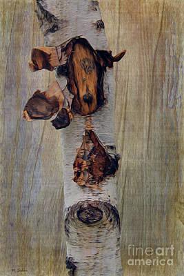 Photograph -  Birch Bark And Board by Nina Silver