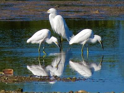 Photograph - # Birds by Vijay Sharon Govender