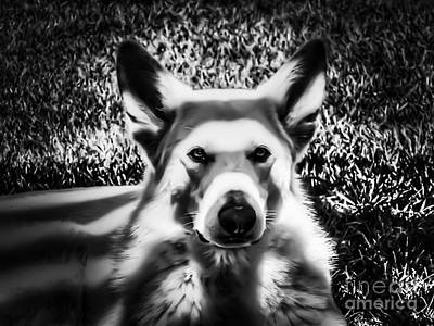 German Shepherd Photograph - Shepherd In The Shadows by Heather Joyce Morrill