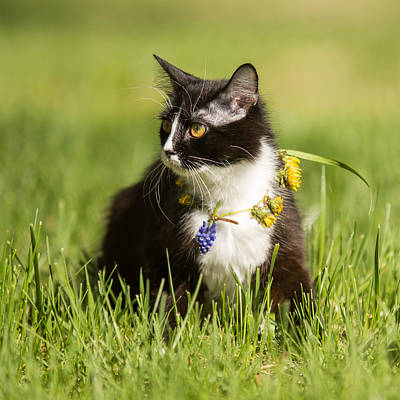 Photograph -   Black Cat Playing On Green Grass Lawn by Alex Grichenko