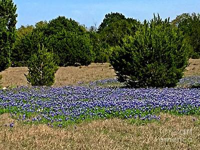 Photograph -  Bluebonnet Trail - No.2016 by Joe Finney