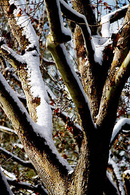 Photograph -  Branches With Snow by Ivete Basso Photography
