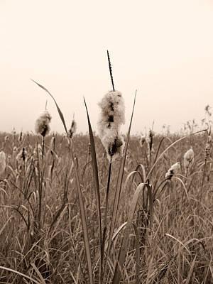 Photograph - Broadleaf Cattail 1 by Jouko Lehto