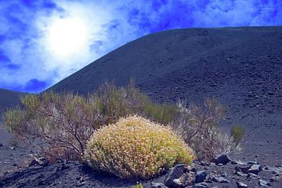 Tenerife Photograph -  Bush Of Flowers And Fasnia Volcano by Jean-luc Bohin