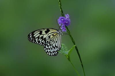 Photograph -  Butterfly On Flower  by Sandy Keeton