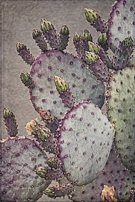 Photograph -  Cactus Colors B by Theo O'Connor