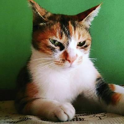Photograph - 良い写真撮れなかった… #cat by Masamichi Takano