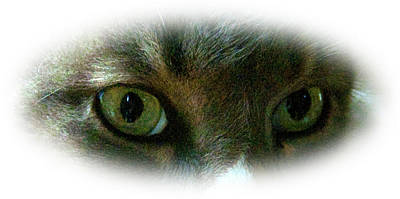 Photograph -  Cat's Eyes 2 by Barry Doherty