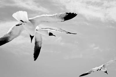 Photograph -  Chaos - Seagulls Black And White by Colleen Kammerer