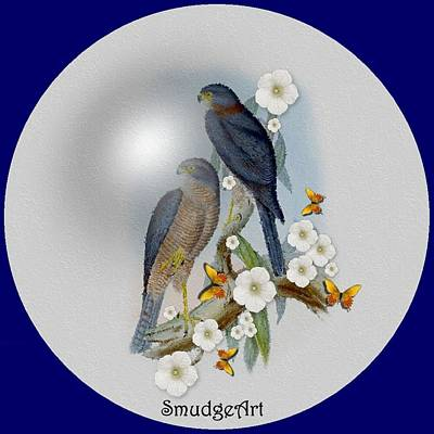 Collared Sparrow Hawk Print by Madeline  Allen - SmudgeArt