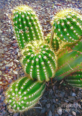 Photograph -  Desert Cactus Plant by Claudia Ellis