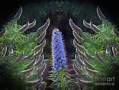 Photograph -  Echium In Bloom by Jim Fitzpatrick