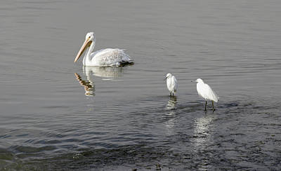 Photograph -  Egrets -  I Have A Few by Rae Ann  M Garrett