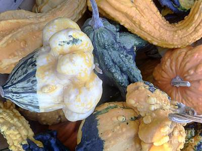 Photograph -  Fall Colors Pumpkins And Gords 3 by Edward Sobuta