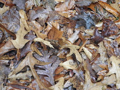 Photograph -  Fallen Leaves by Robin Coaker