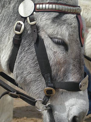 Photograph -  Fellow Donkey.  by Mary J Tait