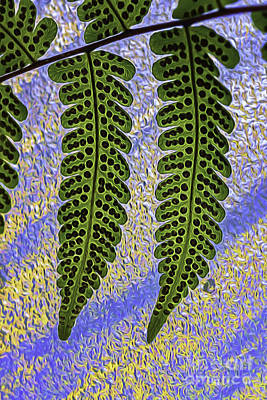 Photograph -  Fern Fronds by Darleen Stry