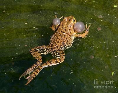 Frog Beauty Art Print