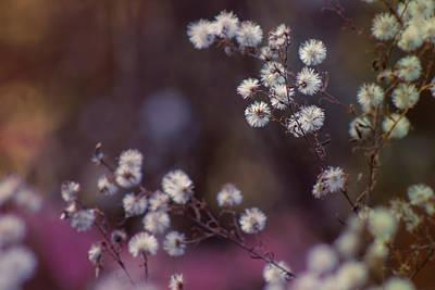 Photograph -  Fuzzy Fall  by Bulik Elena