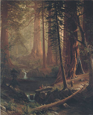 Painting - Giant Redwood Trees Of California by Albert Bierstadt