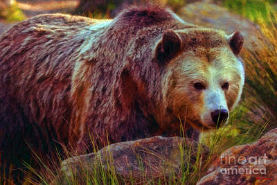 Photograph -  Grizzly Bear In Rocks by Blake Richards