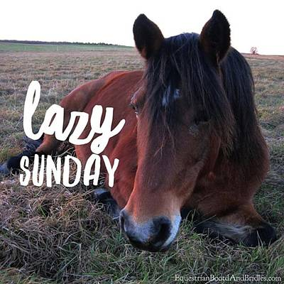 Photograph - 🐴 Happy Sunday Everyone! 🐴 by Equestrian Boots And Bridles