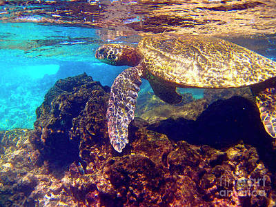 Hawaiian Green Sea Turtle Photograph -   Honu On The Reef by Bette Phelan