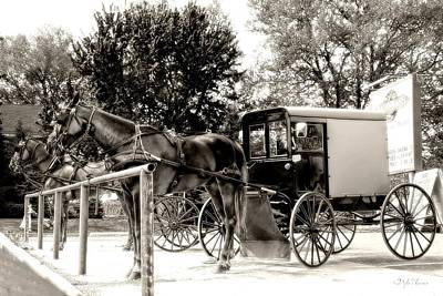 Photograph -  Horses N' Buggies by Dyle   Warren
