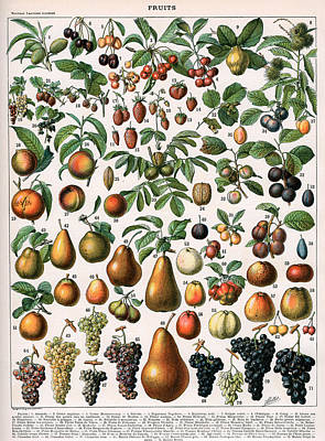 Illustration Of Fruit Varieties Art Print by Alillot