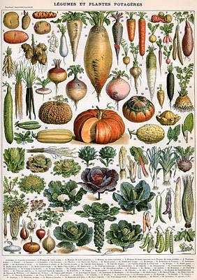 Illustration Of Vegetable Varieties Art Print by Alillot