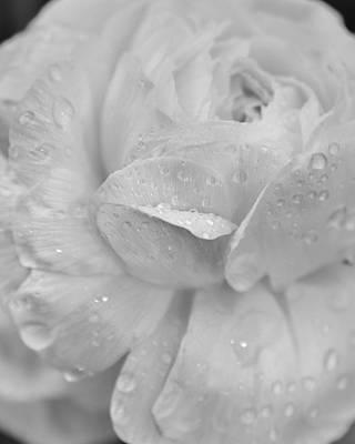 Photograph -   In Springs Stillness by Rae Ann  M Garrett