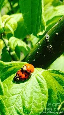 Photograph -  Ladybugs In Love - No. 2016 by Joe Finney