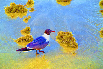 Photograph - Whimsical Laughing Gull  by Kay Brewer