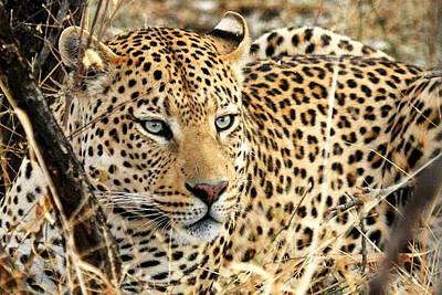 Leopard Eyes Art Print by Tom Cheatham