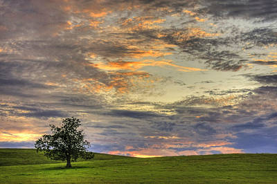 Sunset Photograph - Lonley Tree by Matt Champlin