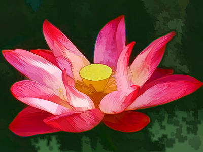 Lotus Flower 2 Art Print