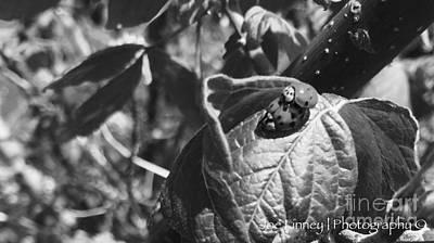 Photograph -  Love-bugs - No. 2016 by Joe Finney