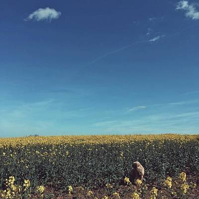 Warwickshire Photograph - 💛 #love #countryside #farm #fields by Emma Gillett
