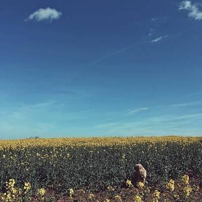 Warwickshire Wall Art - Photograph - 💛 #love #countryside #farm #fields by Emma Gillett