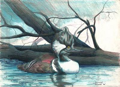 Merganser Duck Art Print by Raymond Doward