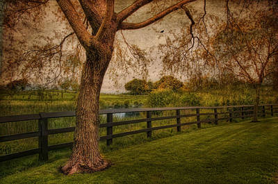 Photograph -  Mid Summer's Daydream by Robin-Lee Vieira