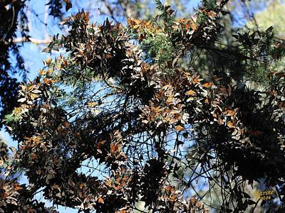 Monarch Large Cluster Art Print