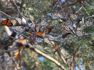 Monarch Mixed Cluster Art Print