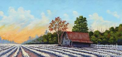 Montmorenci Cottonfield Art Print